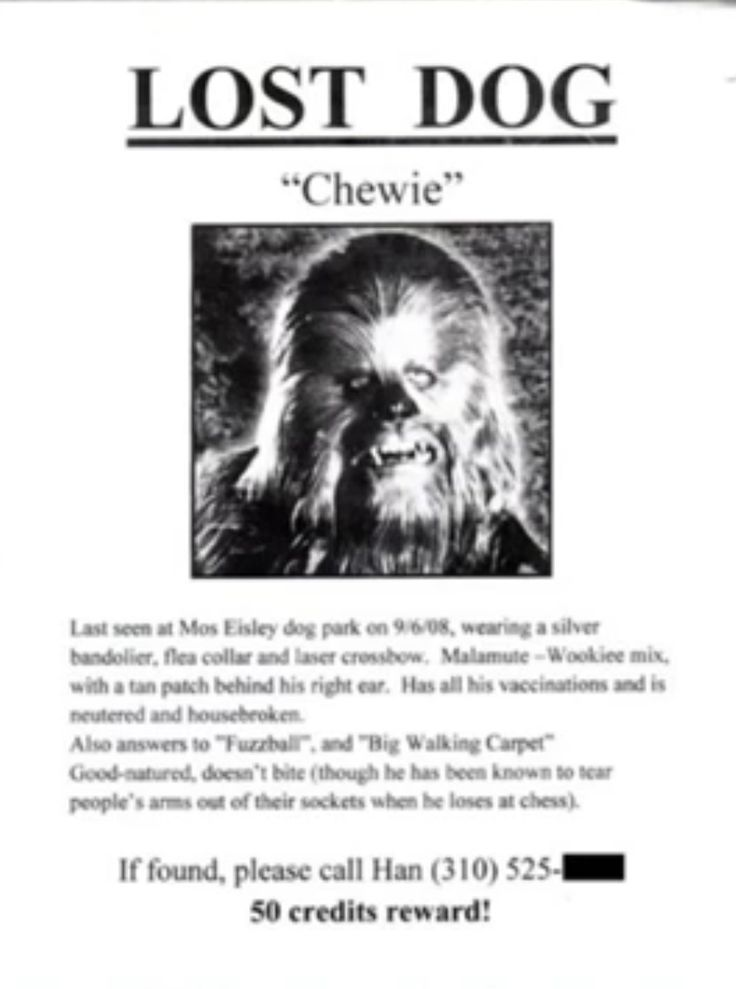 26 best Lost images on Pinterest Book jacket, Comedy news and - found dog poster template