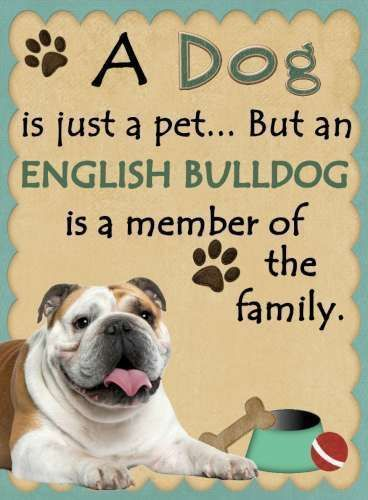 ENGLISH BULLDOG Is a Member of the Family Magnet