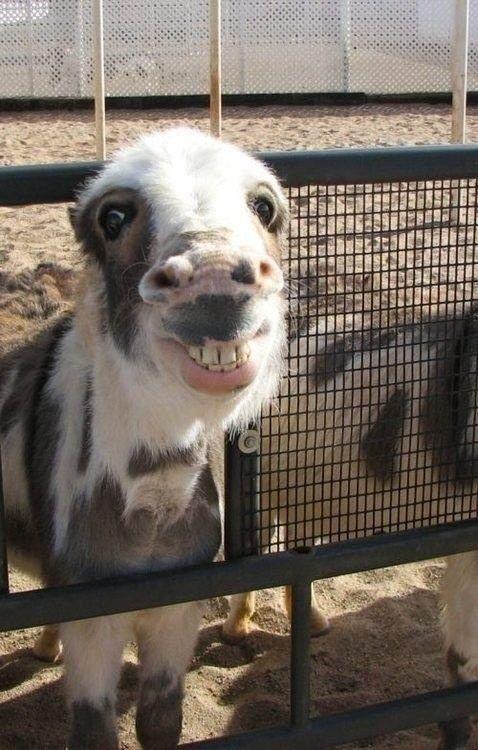 Und dieser Esel