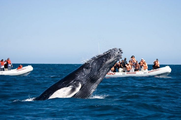 Наблюдение за китами в Восточном Уругвае