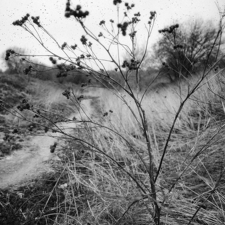 Last year's grass by Ivan Popov on 500px