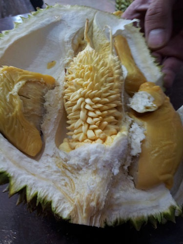 essay malaysia fruits People in malaysia of all races love fruits the malays use some fruits in their dishes (think for example of pineapple-curry)  malaysian food from the indian.