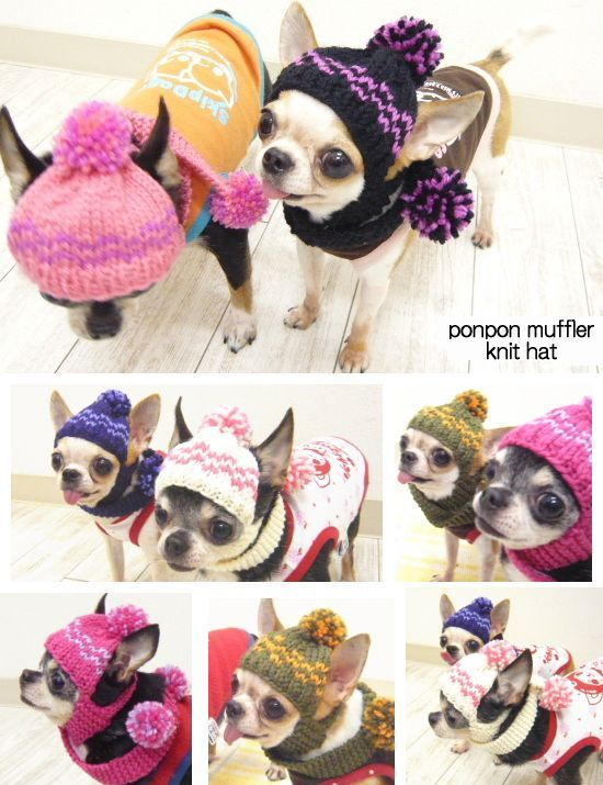 skipdog | Rakuten Global Market: With a Pom Pom scarf knit caps (clothing fake dog clothes Chihuahua small dog knit CAP)