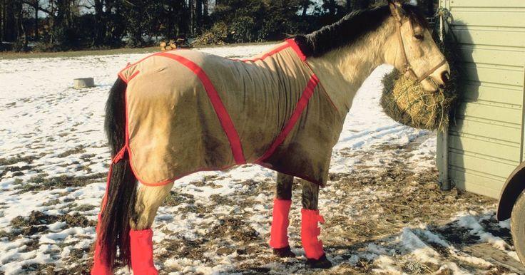 Como fazer capas para cavalos. Possuir cavalos é um empreendimento caro. Fazer uma capa para seu cavalo, ao invés de comprar uma, ajuda a reduzir o custo de possuir um. Não é sem alguns contratempos. Você precisa saber como colocar a linha e a bobina, bem como orientar a máquina numa linha reta. Você pode até ter que arrancar algumas costuras e começar de novo para alcançar a ...
