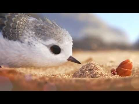 "In Pixar Animation Studios' new short, ""Piper,"" a hungry sandpiper hatchling discovers that finding food without mom's help isn't so easy."