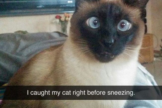 75 Funny Pictures For Today (#77)