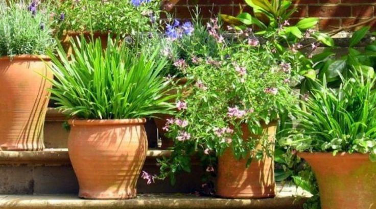 Выращивание растений в контейнерах: 5 правил, о которых стоит помнить   Дизайн участка (Огород.ru)