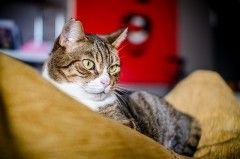 Oggi è la giornata internazionale del #gatto. Come fare per rendere la casa adatta alla convivenza con gli amici felini?