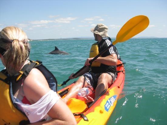 Spot dolphins on a Kayak Noosa #Queensland #Australia  http://www.tripadvisor.com.au/ShowForum-g255067-i460-Queensland.html