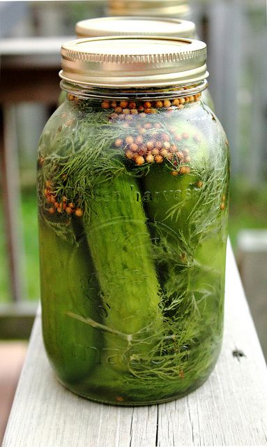 Recipe, Homemade Pickles, Dill Pickles, Adventuress Heart, Easy Garlic ...