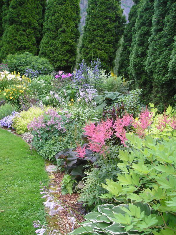 Here is one of my flower beds with a list of some of the plants in it. Overview Part sun/Part shade Hellebore orientalis, purple leaf is Ligularia 'Britt-Marie Crawford', Hosta 'francee', Dicentra 'Gold heart', spectabilis & eximia, corydalis, Brunnera 'Jack frost', Heuchera 'purple petticoats' ...  ~ Great pin! For Oahu architectural design visit http://ownerbuiltdesign.com