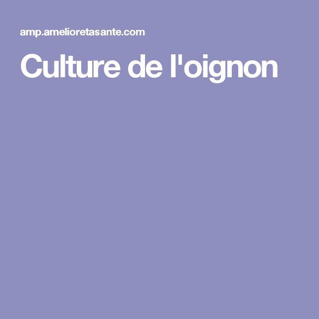 Culture de l'oignon