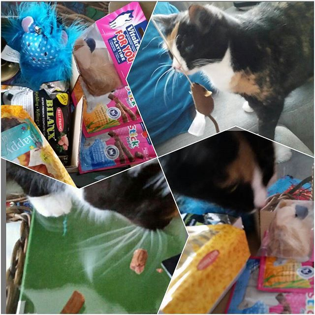 Crazy catlady måste ge en kattbox till katten!