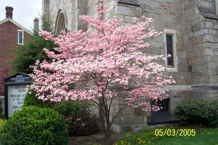 Pink dogwood. Looks great against the light stone - should look good against tan siding as well!