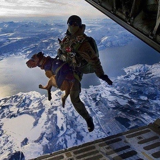 Quot The Navy Seal Dog Of Choice Is The Belgian Malinois They