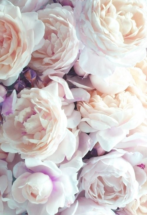 Romantic flowers - soft tones, pretty floral photography