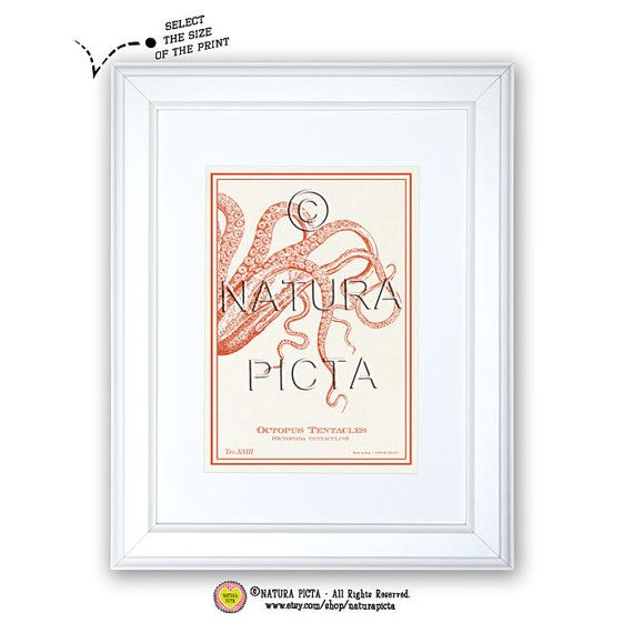 Octopus Tentacles art printCoastal printBeachy by naturapicta, $5.99 © NATURA PICTA All Rights Reserved