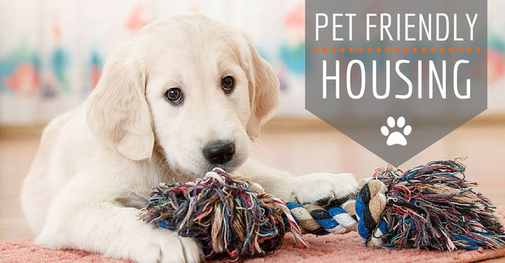 Have a #dog or #cat but don't know where to move? Here are some quick tips to help you find pet-friendly housing. - http://www.entirelypets.com/pet-friendly-housing.html?utm_source=twitter&utm_medium=web&utm_campaign=eptwpostarticle