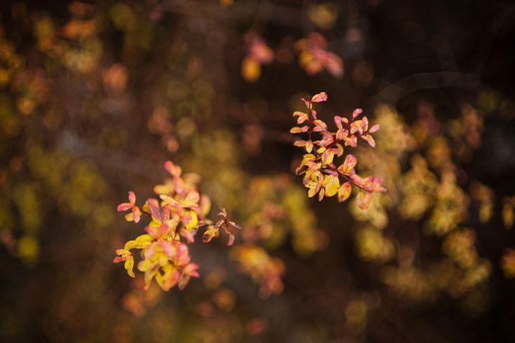Wow, Hilda Grahnat photography. And Wow, November.