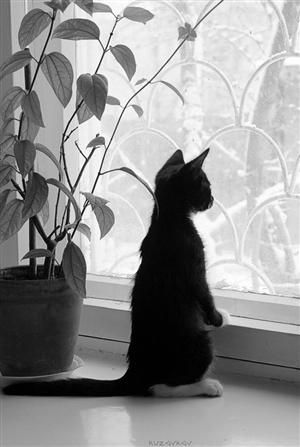 Just cute!Kitty Cat, Pets, Black White, Windows, White Stuff, Blackcat, Black Cat, Animal, White Kittens
