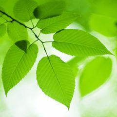 Austin Publishing Group: Austin Journal of Environmental Toxicology