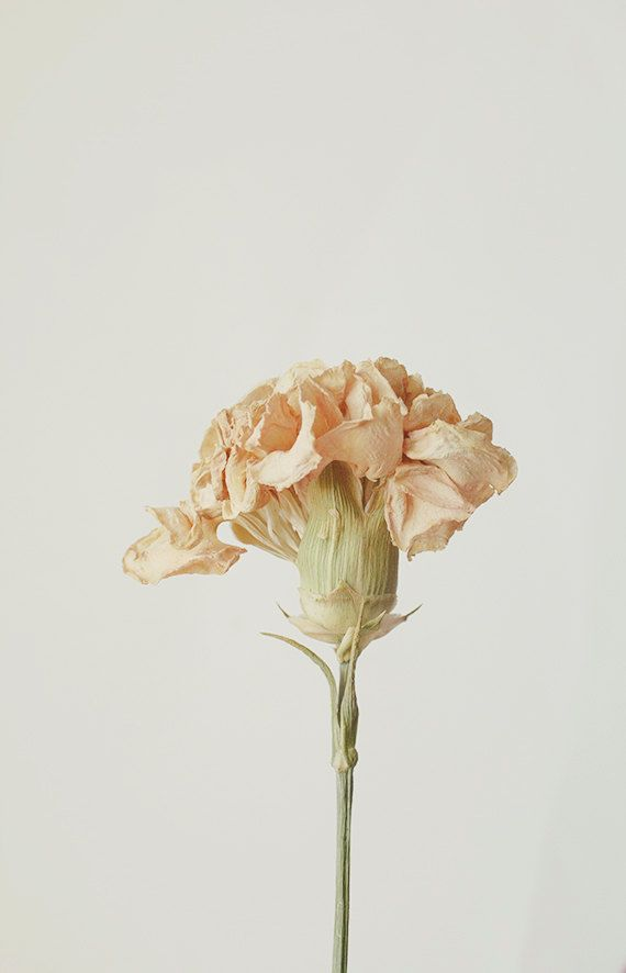 I love the delicacy and fragility depicted in the photograph. Floral Still Life Macro Photography 8x10 Dried by bellesandghosts, $30.00