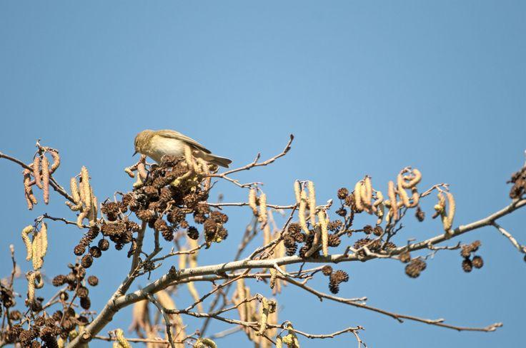 insettivoro - in my waehouse February 2012 - Nikon D300 -Nikon 200-400 mm f/4 - iso 640 - Forte dei Marmi #guidofrilli