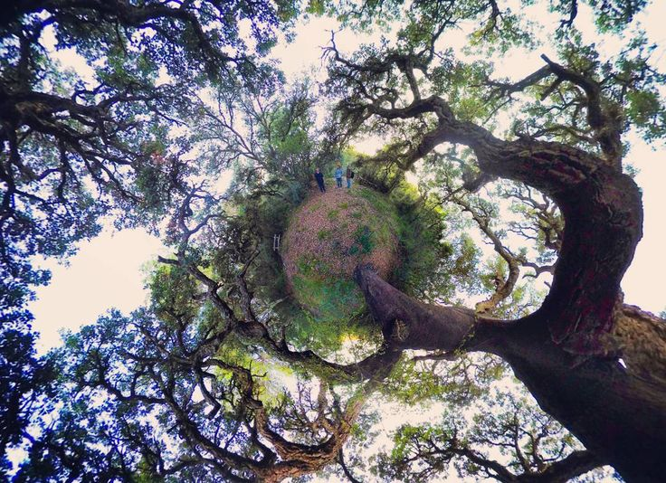 Naturaleza #vrx360 #360 #360grados #nature #naturaleza #arboles #360degrees #littleplanet #tinyplanet #green #verde #perspective #perspectiva #realidadvirtual #virtualreality #googlecardboard #vr #castellon #verde #inspire by vrx360