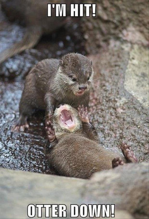 bob the otter: Im down man! AVENGE ME!!!!! Jimmy the otter: *slowly walks away* ...... nah im good bro