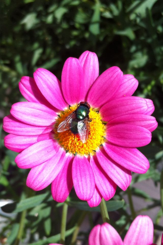 Pink margeritt with a bug.