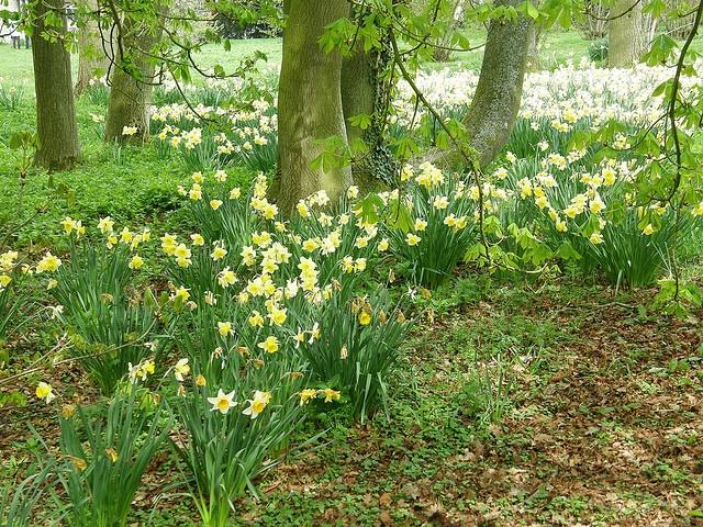Baddesley Clinton Garden