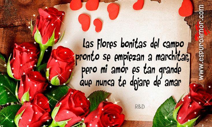 Imágenes de rosas para dedicar a mi amor