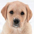 A cute little puppy has been playing in the snow!