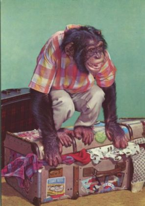 Kruger Postcard, Chimpanzee with suitcase