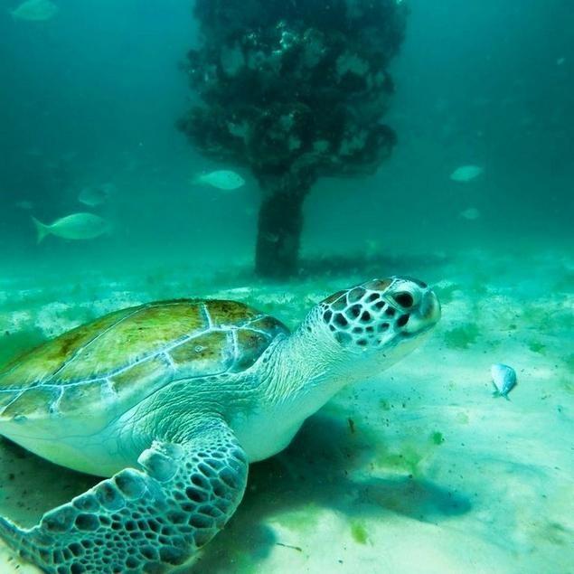 Enjoy a sightseeing adventure under the sea - Entertainment - Northwest Florida Daily News - Fort Walton Beach, FL