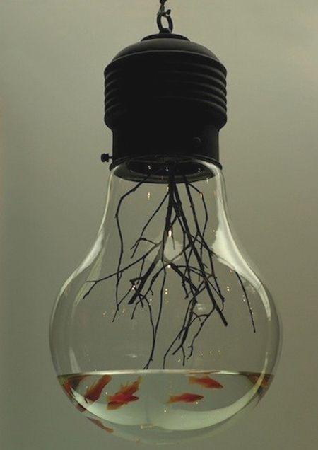 bulb aquarium...interesting!