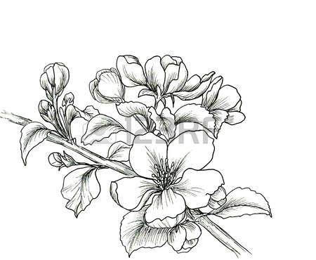 The 25 best Flor de cerezo dibujo ideas on Pinterest  Arte de