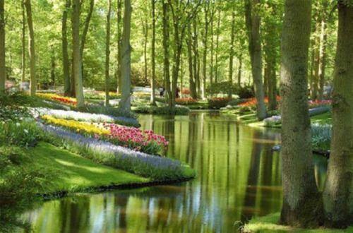 キューケンホフ公園 - オランダ
