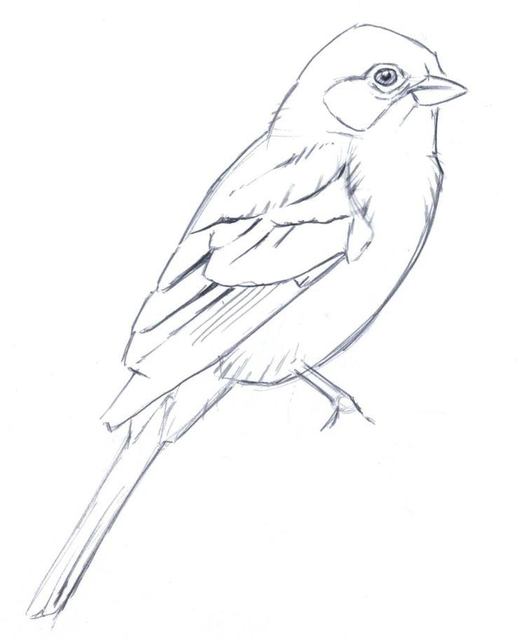 устав птица рисунок срисовать цветков