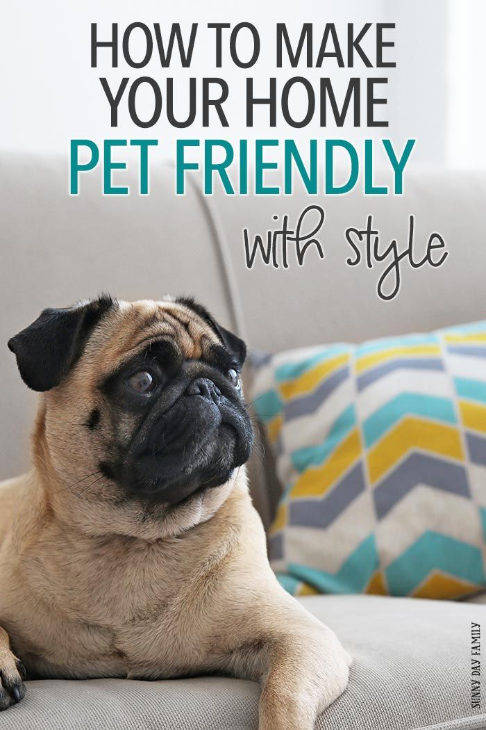 391 best home decor for pets images on pinterest for the home doggies and dogs - Make house pet friendly ...