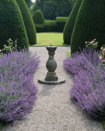 Stunning borders of Nepeta 'Six Hills Giant' with sundial & topiary Yews beyond, at Chirk Castle, Wrexham