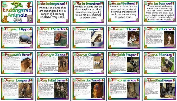 Endangered animals poster Endangered animals facts