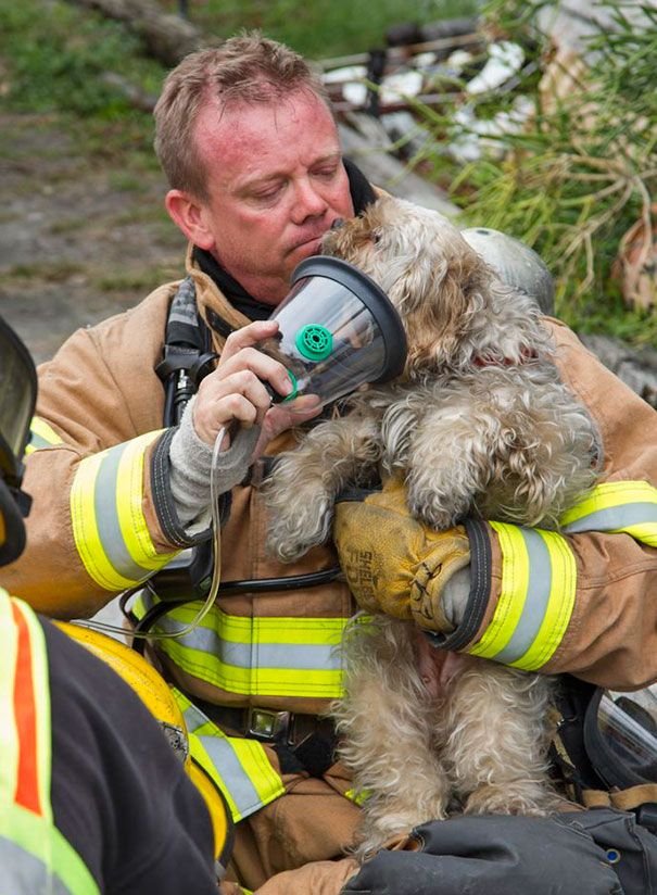 The Dog Rescued From The Structure Fire Took His Head Out Of The Oxygen Mask To Give A Wet Thank You To Ff/Paramedic Mark A.…