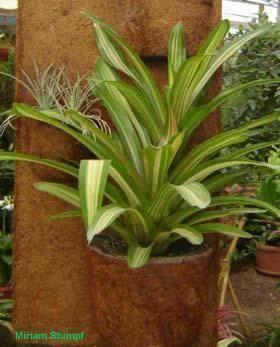 Plantas em placas