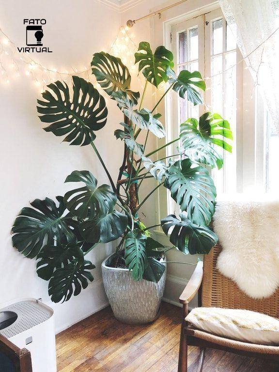 Quais Tipos De Plantas Mais Sobrevivem Dentro De Casa Quartos De Plantas Planta De Decoracao Interior Decoracao Com Plantas