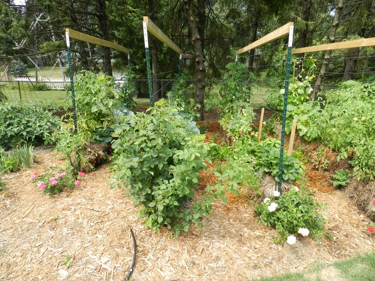 Straw Bale Gardens Complete Guide To Growing A Bountiful