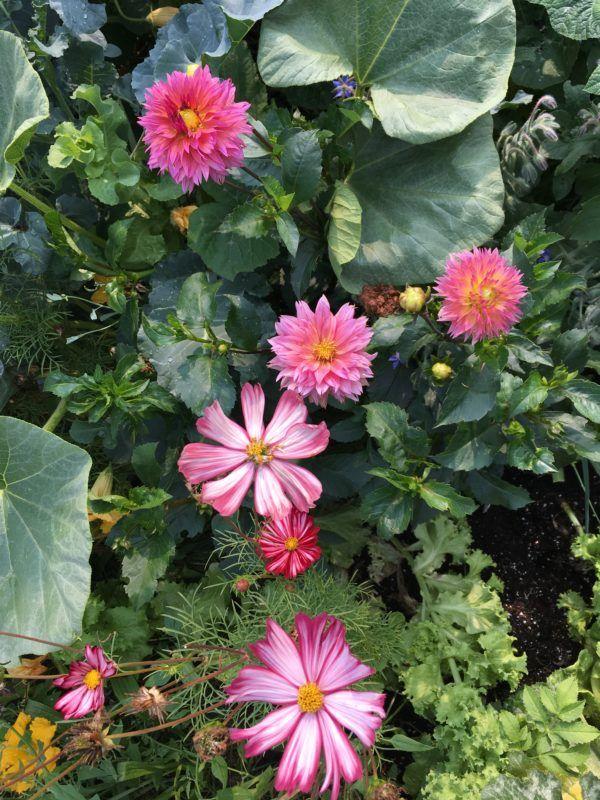 Free Flower Garden Planner Flower Garden Planner Garden Planner