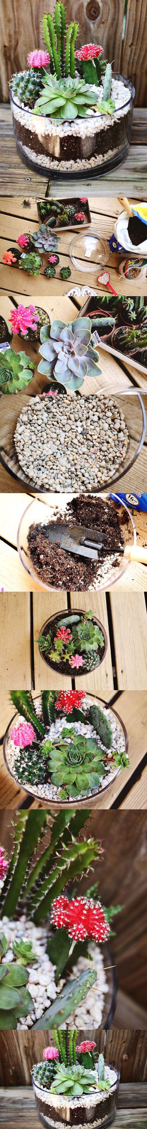 Pequeño jardín con cactus