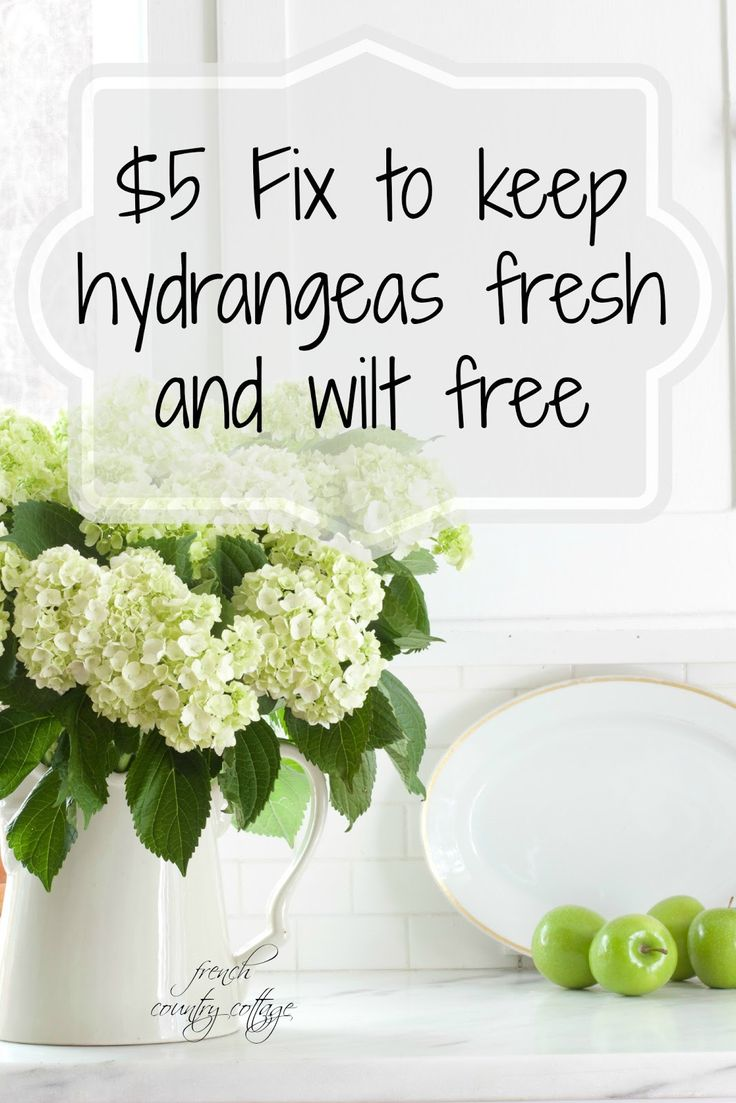 FRENCH COUNTRY COTTAGE: Flower Power~ $5 fix to keep hydrangeas fresh #bHomeApp