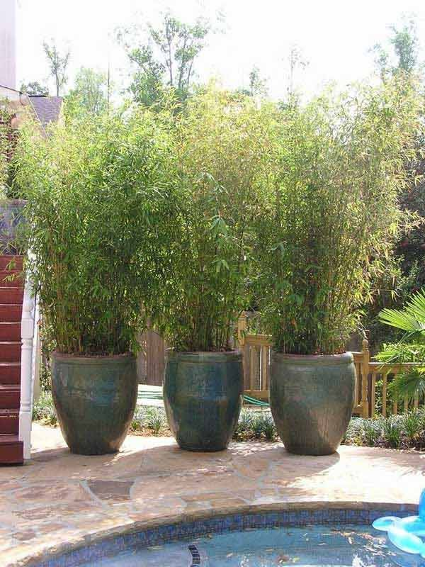 Potted bamboo screen: 22 Fascinating and Low Budget Ideas for Your Yard and Patio Privacy